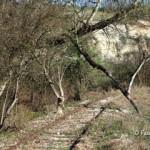 scorcio del tracciato della Ferrovia della Valmorea